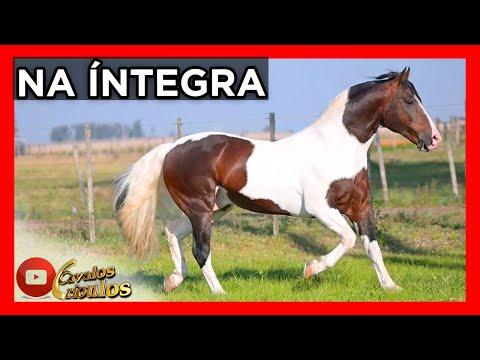 PROGRAMA NA INTEGRA- 05/09/2021