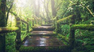 숲소리, 새소리, 바람 (고음질) | 10시간 | ASMR | 명상, 깊은 잠, 공부, 집중, 수면유도, 치유 | Forest | Birds Singing