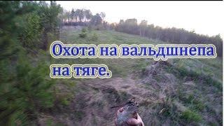 Весенняя охота на вальдшнепа на тяге 2016.Три дня охоты.(Охота на вальдшнепа на тяге,три дня охоты., 2016-05-19T03:26:17.000Z)