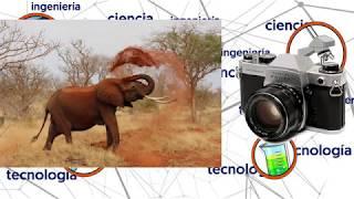 ¿Cuál es la relación entre el elefante y la cámara fotográfica?