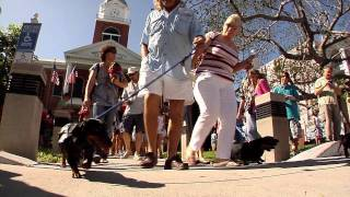 Dachshund Parade in Key West - Weiner Dog Walk