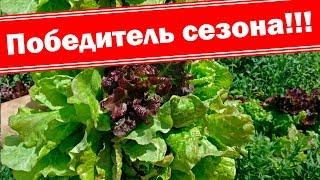 🥦🥗Лучший салат сезона 2019 🥗🥦