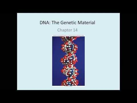 Chap  14 DNA The Genetic Material