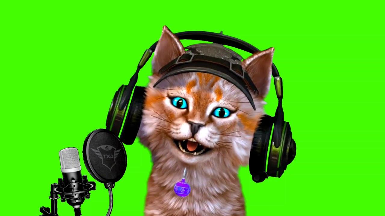 kucing anggora unik tanpa kursi gaming green screen ...