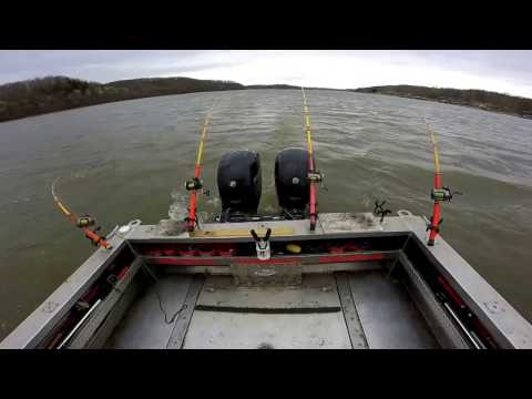 FISH4FUN: SPOONBILL CATFISH ANOTHER WAY TO SNAG THEM