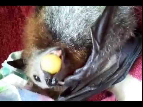 Happy Bat Pomona.