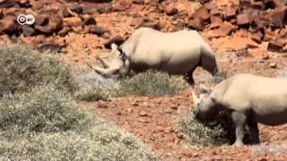 Protección de rinocerontes | Versión corta | Ideas globales