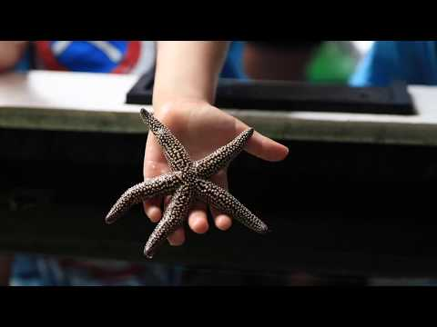 Florida Travel: How to Visit the Gulf Specimen Marine Lab