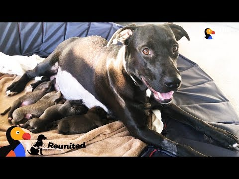 None - Family Reunites Mama Dog with Puppies