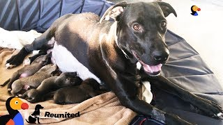 Mother Dog Reunited With Her Puppies All Grown Up | The Dodo Reunited