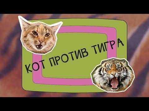 ТораДора! Смотреть онлайн, Аниме Тигр против Дракона
