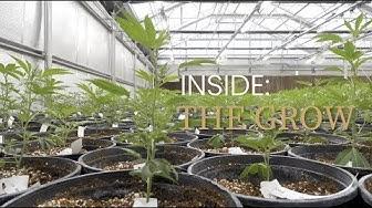 INSIDE THE GROW   EPISODE #001   HARVEST   CAMP VERDE, AZ