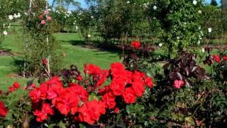 State Rose Garden Victoria Australia