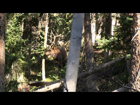 A BOWHUNTER'S WORST NIGHTMARE - COLORADO BACKCOUNTRY ARCHERY ELK HUNT - DAY 6
