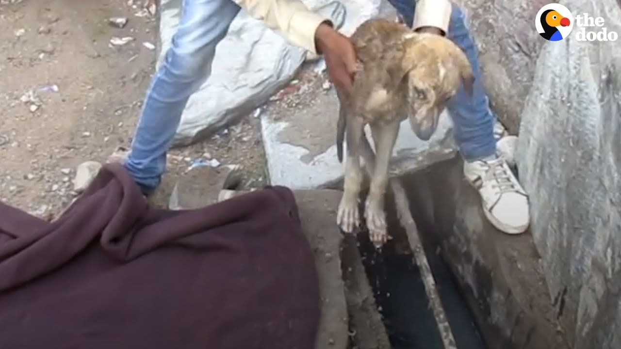 sick-stray-puppy-heals-thanks-to-his-rescuers-the-dodo