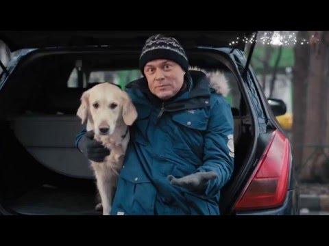 Как подружить собаку с машиной