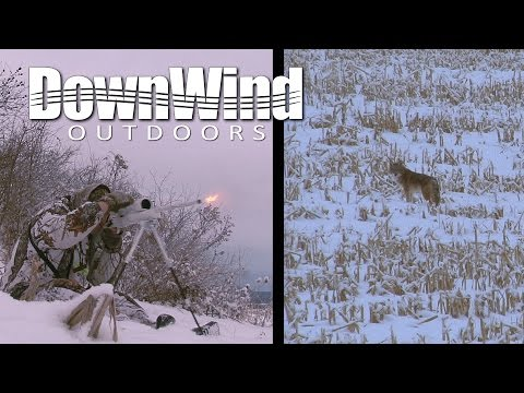 Eastern Coyote Hunting:  Tracked Down (DownWind Outdoors)