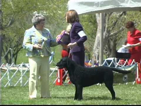 The 2009 Curly-Coated Retriever Club National Specialty