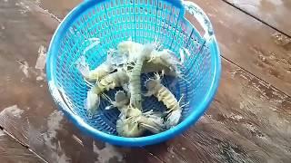 lobster crab crab and lobster lobster lobster delivery lobster on sale fresh lobster