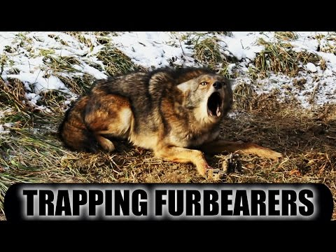Trapping Furbearers 2014 - 2015 Season Pennsylvania