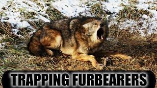 Trapping Furbearers 2014 - 2015 Season Pennsylvania