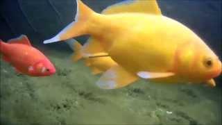 My Pond, underwater test AEE SD21 Magicam
