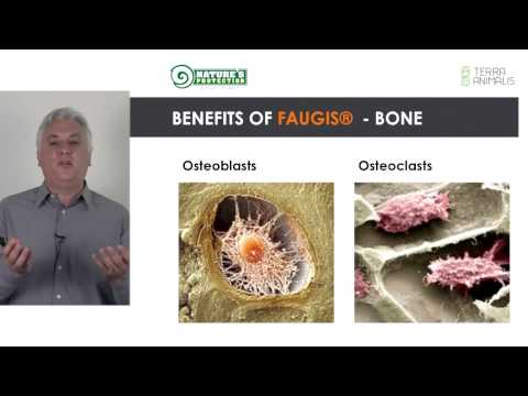 FAUGIS   the highest bioavailable source of the silicium SI