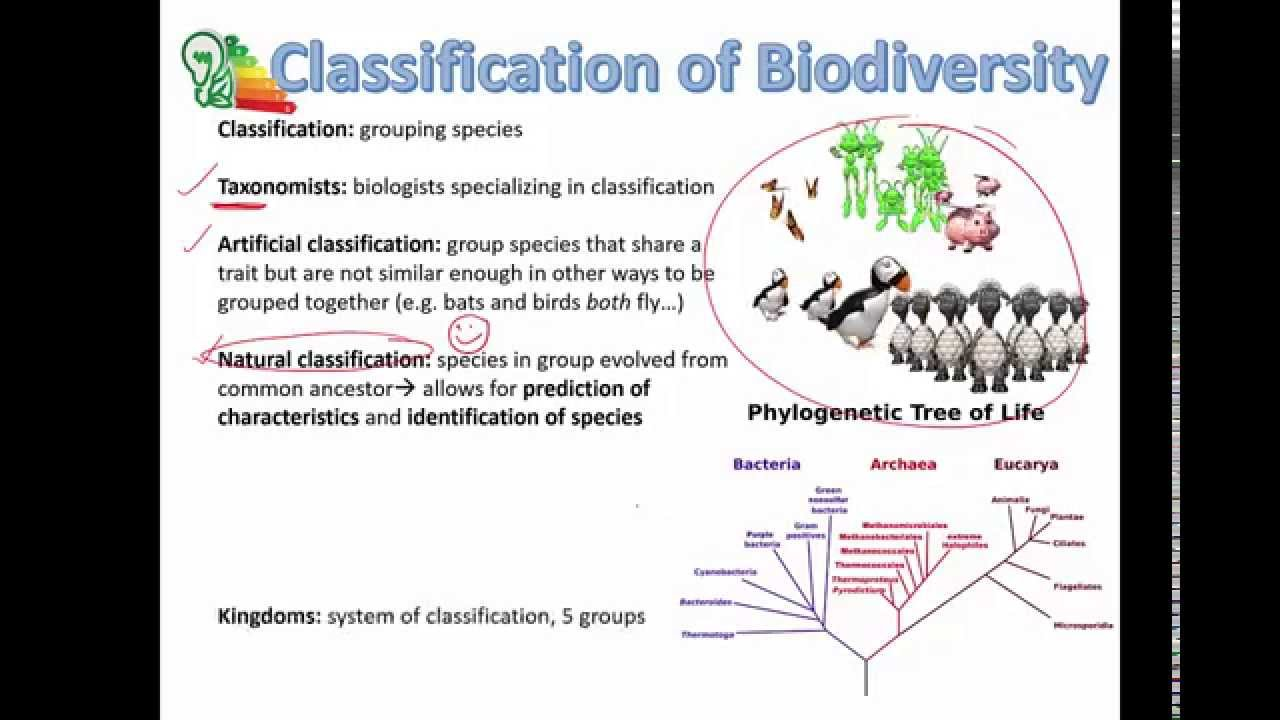 hight resolution of Topic 5.3: Classification of Biodiversity - AMAZING WORLD OF SCIENCE WITH  MR. GREEN