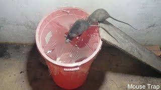 Saving 7 Mice in 10 minute🐀Rat trap 1 gate🐀Stupid Mouse Trap🐭 Easy make a Mouse Trap/Mouse trap