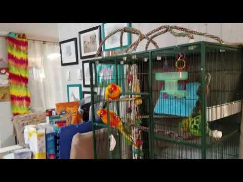 Educational video on Sun conures and Jenday Conures.