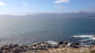 Southern Right Whale watching at Walker Bay, South Africa