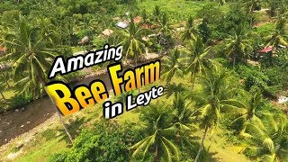 Beengo Farm in Tunga Leyte // Home to the most FRIENDLY BEES in the Philippines