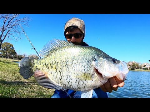 The BIGGEST CRAPPIE I've EVER SEEN!