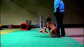 Morze puppy training