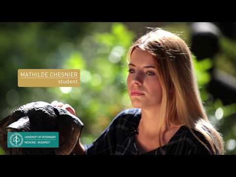 University of Veterinary Medicine - Image Film