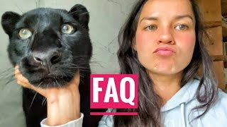Panther Luna answers questions 🐆❓/ the leopard makes a rearrangement in the cage