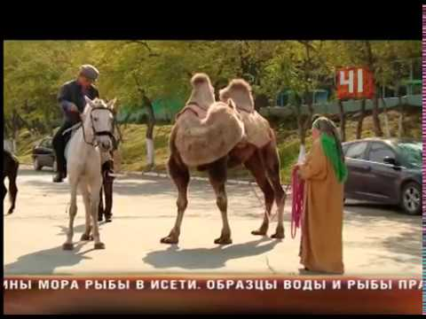 Сахар (2014) — КиноПоиск