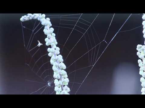 Vorų ratilinis.Voru ratilinis