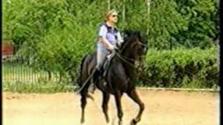 sporthorse dressage Post Menkova Нина Менькова - Пост