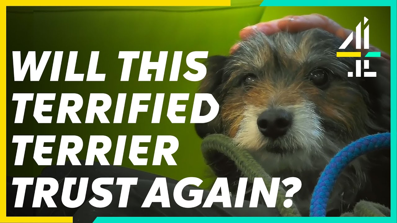 Download This Nervous Terrier Needs a New HOME | The Dog House