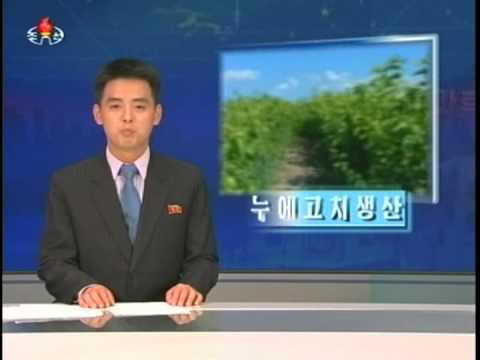 주체103(2014)년 6월 15일 중앙텔레비죤 20시보도