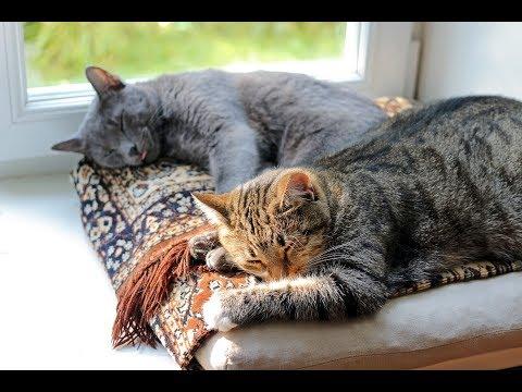 Comment Faire Cohabiter Deux Chats ?