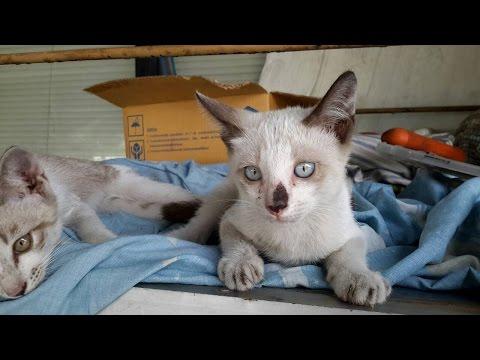 แมวน่ารัก สุดๆ Funny cat