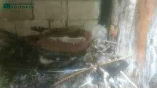 В Калининградском зоопарке родился птенец белоголового сипа