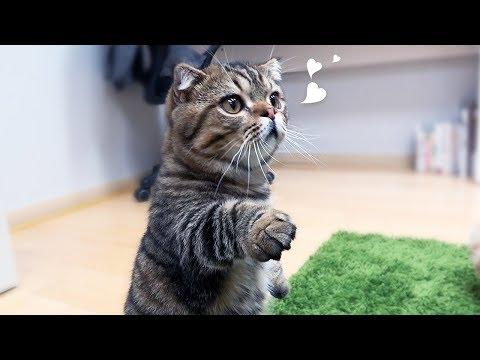 루루애오 치즈볼 주새오! 고양이 치즈볼