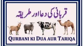Qurbani ki Dua | Qurbani ka tarika | Qurbani ki dua aur tarika | Dua and procedure of Qurbani