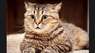 Самые пугливые кошки и коты)