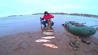 БЕШЕНЫЙ КЛЁВ! РЫБА ОДНА ЗА ОДНОЙ! Попали на жор. Классная рыбалка получилась!