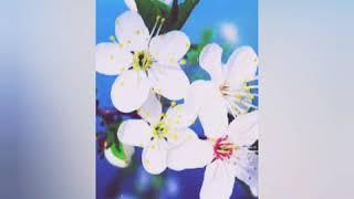Novruz bayrami tebriki. Novruz bayramina aid . Novruz Bayraminiz Mubarek olsun!