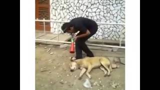 Teasing Dog ... Most Funny Video   Whatsaap Viral Video